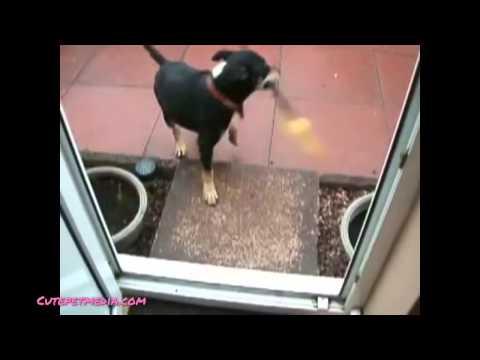 Video clip hài Hài hước với động vật1