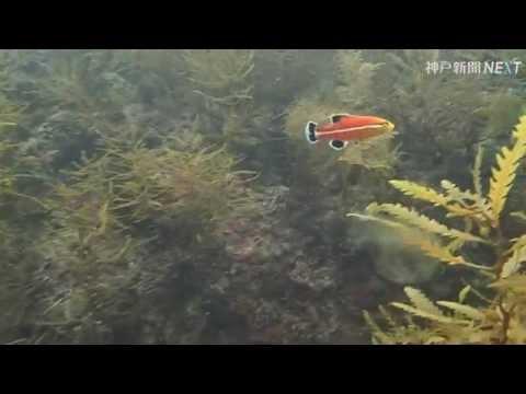 日本海をシュノーケリング