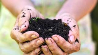 Basics of great garden soil