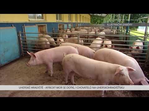 TVS: Uherské Hradiště 19. 01. 2018