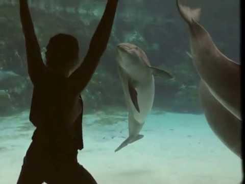 Naisen temppuilu saa delfiinin nauramaan