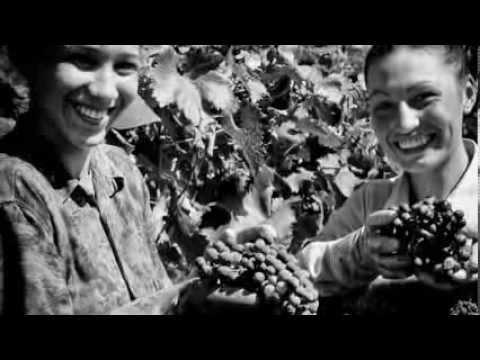 Le Puglie, storie di terre e vini