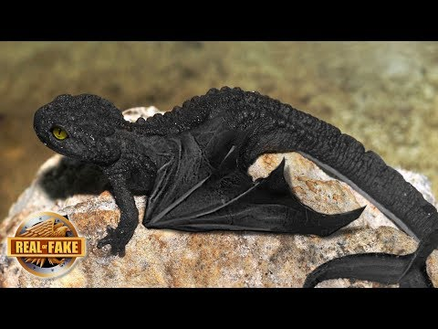 NIGHT FURY DRAGON IN REAL LIFE - real or fake?