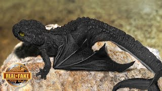 Video NIGHT FURY DRAGON IN REAL LIFE - real or fake? MP3, 3GP, MP4, WEBM, AVI, FLV Desember 2018