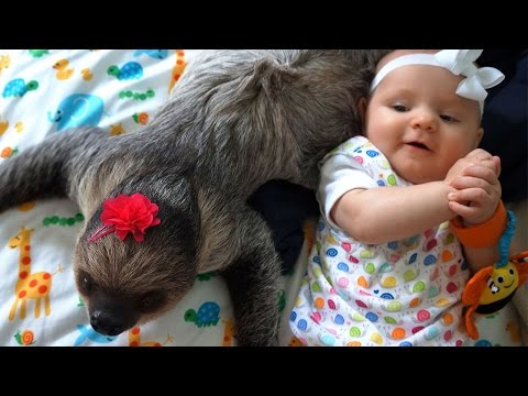 Adorabile amicizia tra un bradipo ed un bambino