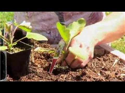 Vegetable Gardening : How Far Apart to Space Vegetables in a Raised Garden?
