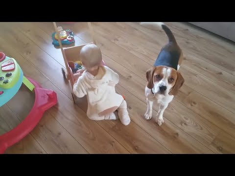 Dog brings toys to little girls wooden pram