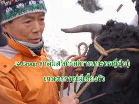 Hida-Gyu เนื้อวัวญี่ปุ่น(เนื้อวากิว)สายพันธุ์แชมเปี้ยนส์