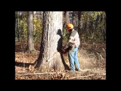 Pond Creek Logging