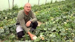 Commande de la Chambre d'Agriculture de Vaucluse, été 2012   ADIV 84