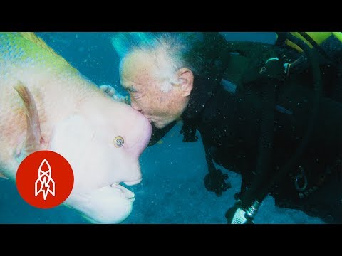 The Longtime Friendship Between a Japanese Diver and the Giant Fish He Saved From Certain