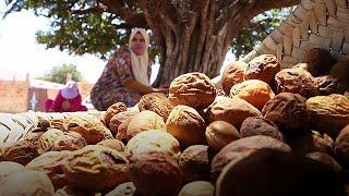Agadir környékén termelik a világ legdrágább növényi olajait. A vitaminokban gazdag argánolaj tele van a bőrt tápláló anyagokkal. Az élet fájának is nevezett növény része a marokkói kultúrának és számottevő egészségügyi hatásai vannak, de védi a földeket az elsivatagosodástól is, jó hatással van a gazdaságra, és segíti a falusi nők megélhetését.Július és augusztus között aratnak, ebben az időszakban több ezer marokkói nő kap munkát a földeken.– Az argántermelésnek fontos gazdasági hatása van…BŐVEBBEN: http://hu.euronews.com/2017/07/18/az-arganolaj-marokko-aranyaeuronews: Európa legnézettebb hírcsatornájaIratkozzon fel! http://www.youtube.com/subscription_center?add_user=euronewsHungarianAz Euronews elérhető 13 nyelven: https://www.youtube.com/user/euronewsnetwork/channelsMagyar: Website: http://hu.euronews.com/Facebook: https://www.facebook.com/euronewsTwitter: http://twitter.com/euronewshu