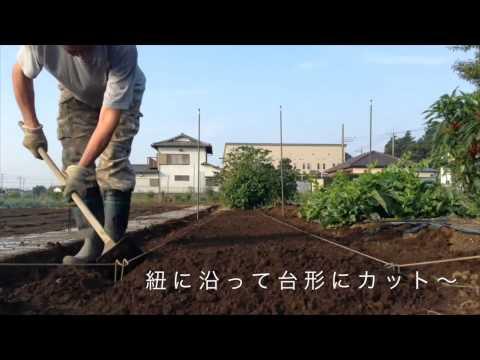 美味しい白菜は土作りから