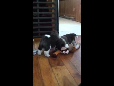 Remi in beginning playing with toy then brothers follow