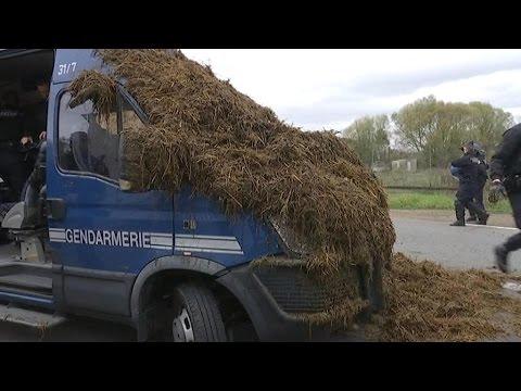 Florange (57) : Les agriculteurs répandent du fumier pour interpeller François Hollande