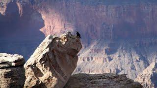 Grand Canyon (AZ) United States  City new picture : Visiting Grand Canyon National Park, National Park in Arizona, United States