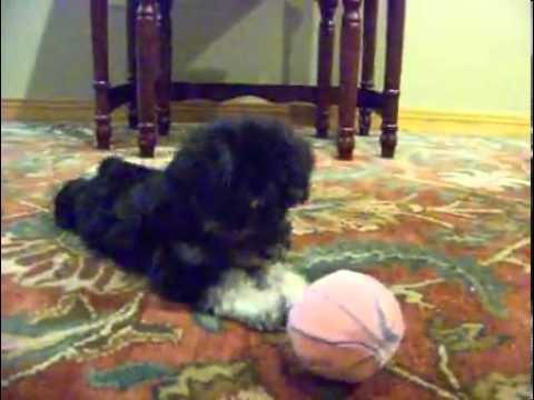 Bailey..Gorgeous!!!VIDEO!!