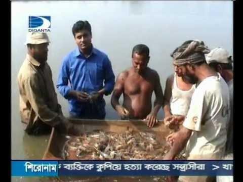 Shrimp Export Problem In Bangladesh