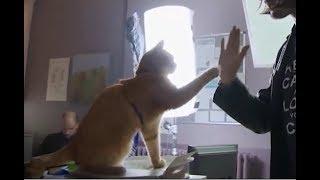 ネコ俳優とハイタッチメイキング/映画『ボブという名の猫 幸せのハイタッチ』舞台裏をおさめたメイキング映像