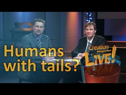 Humans with tails? (Creation Magazine LIVE! 5-03)