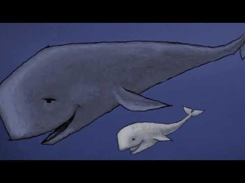 Centre de Titelles de Lleida. ¿Dónde vas Moby Dick?