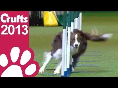 agility - Agility - Kennel Club Novice Cup - Agility - Crufts 2013 Day One Give this video the thumbs up if you enjoyed and don't forget to subscribe! Follow Crufts on...