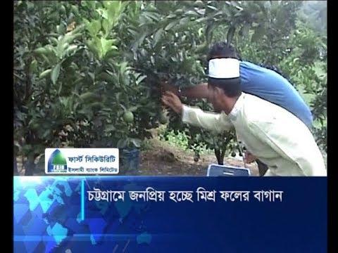 চট্টগ্রামে জনপ্রিয় হচ্ছে মিশ্র ফলের বাগান | ETV News