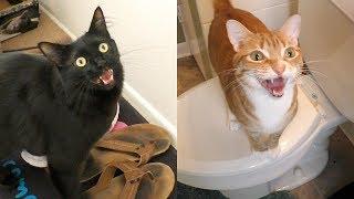 猫の鳴き声には意味がある。7種の鳴き方とその意味