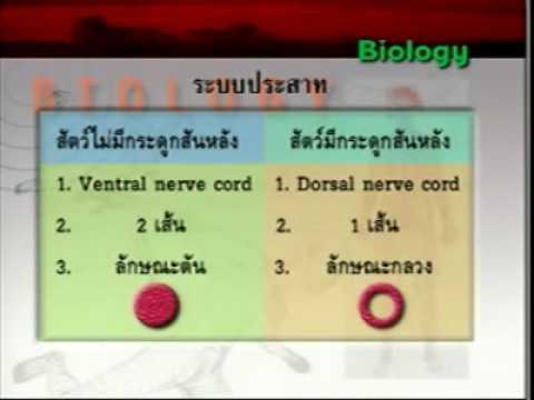 ระบบประสาท ม 5เทอม1 ตอน1 มี 19 ตอน  by aof dek-dsk