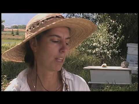 Sister Bee, Beekeeping Documentary Trailer
