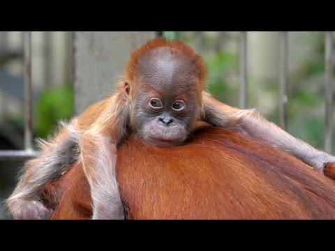 Deutschland: Planet Wissen - Hat der Zoo eine Zukunft?