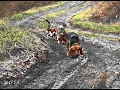 Skyview's Beagles Rabbit Hunting