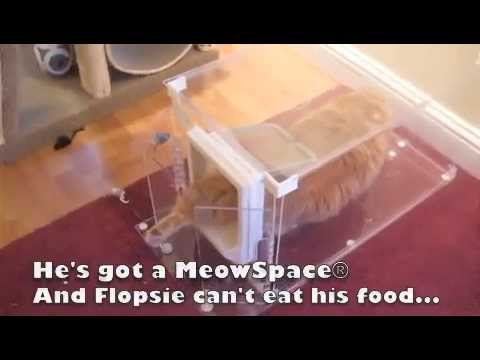 MeowSpace® Cat Feeder & Litter Box Control Station - MeowSpace®