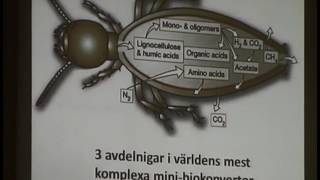Thumbnail for video: Biomimetik - Djuren lär dig om Skaparen - Pekka Reinikainen