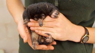 Пополнение в Австралийском зоопарке