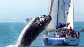 Whale hits & smashes yacht in South Africa