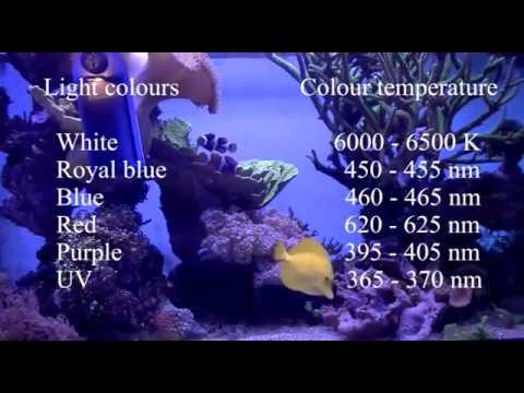 aquarius LED - Aqua Medic - Review by DreamReef.nl (English)
