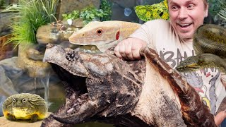 HUGE CAGE by CAGE REPTILE ZOO tour!!!   BRIAN BARCZYK by Brian Barczyk
