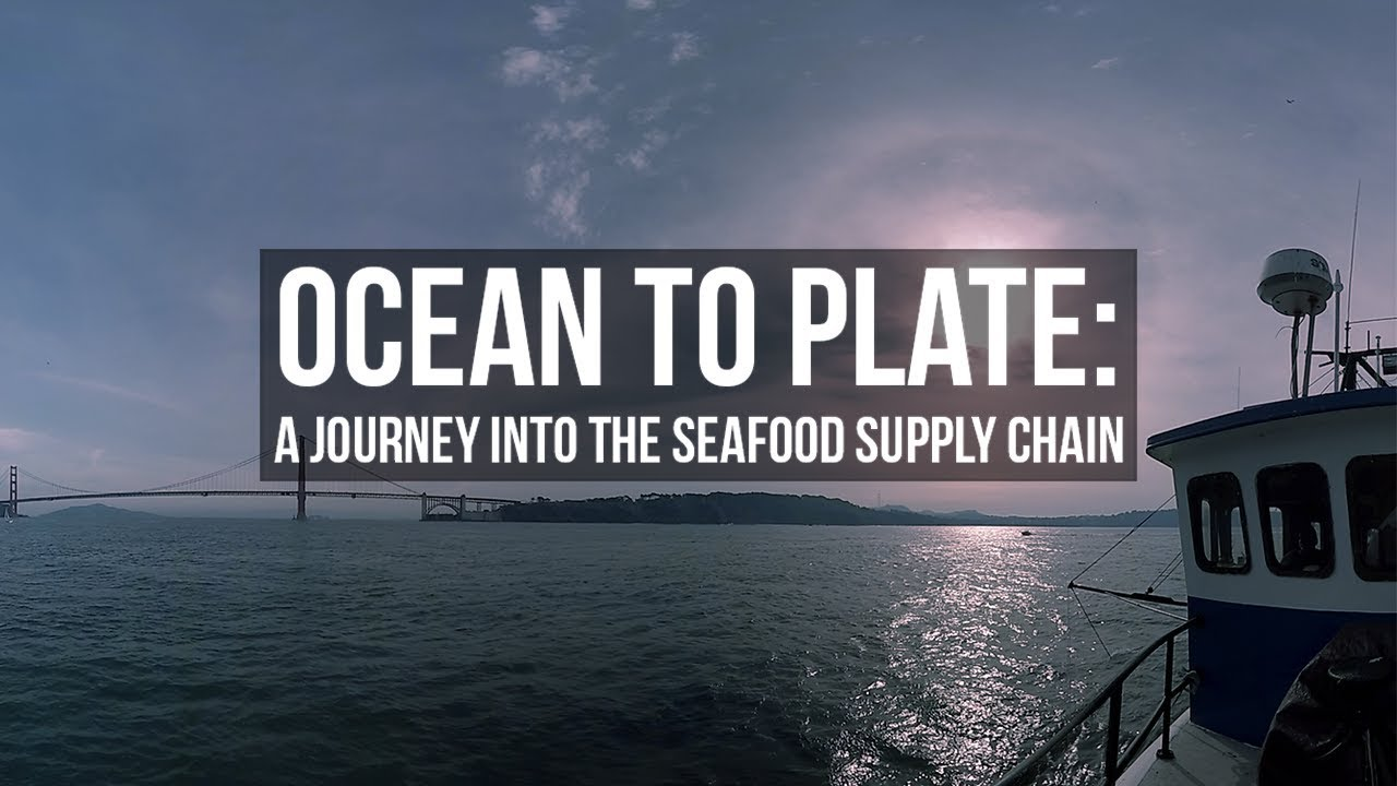 Ocean to Plate: A Journey into the Seafood Supply Chain