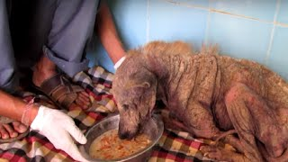 Incredible Transformation of dying Helen, a street Dog. by Did You Know Animals?