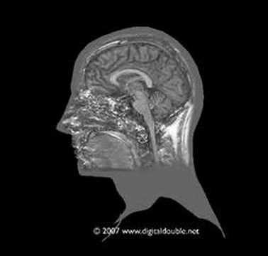 Brain Anatomy Tutorials From Youtube Kaans Dervish Lodge