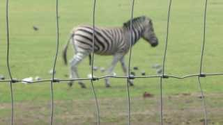 Nonton Yorkshire Wildlife Park Horny Zebra 2013 Film Subtitle Indonesia Streaming Movie Download