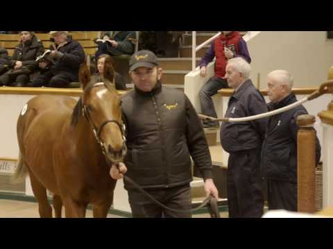 Tattersalls December Foal Sale Day 2 2016