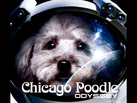, title : 'Chicago Poodle 「ODYSSEY」'