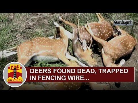 Deers-found-dead-trapped-in-Fencing-Wire-near-Thirumandurai-Thanthi-TV