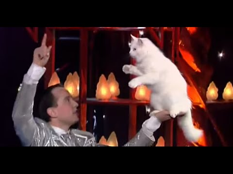 Amazing Cats Training ! Angorian Cats - The world greatest Cabaret