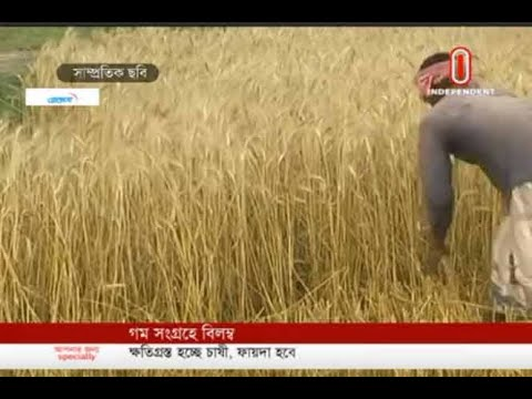 Maize collection yet to begin in Meherpur (23-05-2019) Courtesy: Independent TV