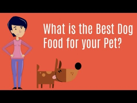 What is the Best Dog Food Brand? Rating the Healthiest Dry Dog Food for Puppies and Adults