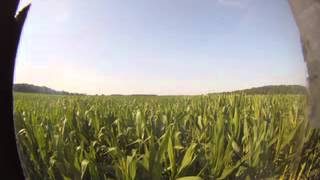 Heck of a Cornmaze growth timelapse 2 RAW