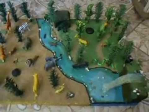Videos Relacionados Con Animales Selva Humeda